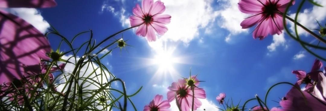 yoga in beweging bloemen